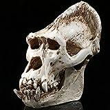 Gudessly Smaller Version Gorilla Resin Skull Replica Personality Medical Teaching Skeleton Model Home Decoration 4.3 x 3.1 x 2.4 inchs