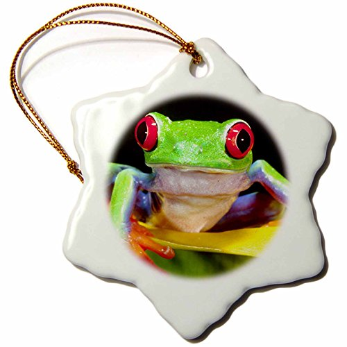 3dRose orn_83768_1 Red Eye Tree Frog on a Calla Lily, Central America NA02 DNO0025 David Northcott Snowflake Porcelain Ornament, 3-Inch ()