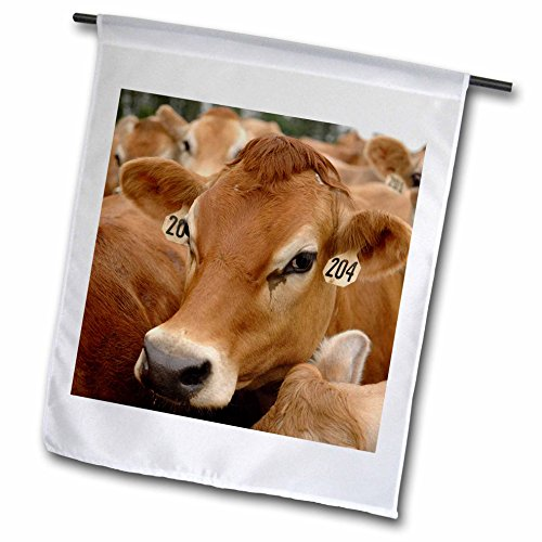 3dRose fl_97172_1 Jersey Dairy Cows, Rib Lake, Wisconsin-US50 KRS0004-Keith and Rebecca Snell Garden Flag, 12 by 18-Inch (Dairy Jersey Cows)