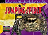 img - for Jumping Spider (Life Cycles) book / textbook / text book