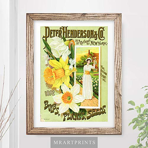 VINTAGE YELLOW DAFFODILS FLOWERS FLORAL ADVERTISING ART PRINT Shabby Chic Home Decor Victorian Illustration Painting Wall Picture A4 A3 A2 (10 ()