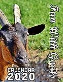 Fun With Goats Calendar 2020: 14 Month Desk