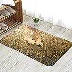 X-Large Funny Looking Golden Cocker Spaniel Dog Animals Wildlife Doormat Entrance Mat Floor Mat Rug Indoor/Front Door/Bathroom/Kitchen and Living Room/Bedroom Mats 23.6 X 15.8 Inch 4