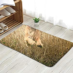 X-Large Funny Looking Golden Cocker Spaniel Dog Animals Wildlife Doormat Entrance Mat Floor Mat Rug Indoor/Front Door/Bathroom/Kitchen and Living Room/Bedroom Mats 23.6 X 15.8 Inch 19