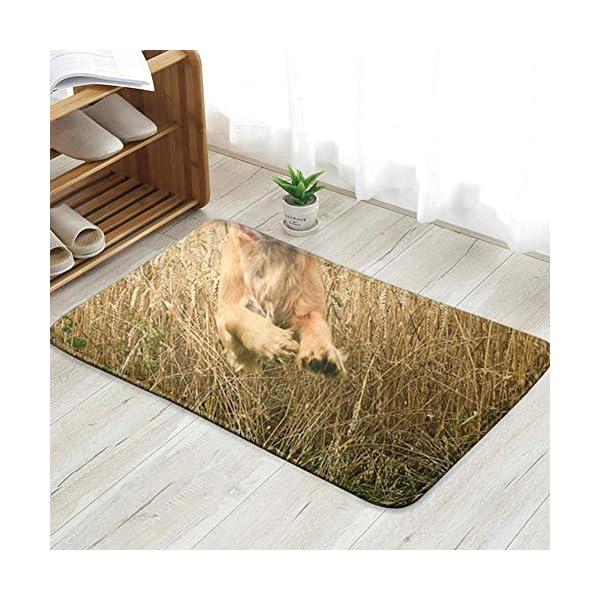 X-Large Funny Looking Golden Cocker Spaniel Dog Animals Wildlife Doormat Entrance Mat Floor Mat Rug Indoor/Front Door/Bathroom/Kitchen and Living Room/Bedroom Mats 23.6 X 15.8 Inch 1