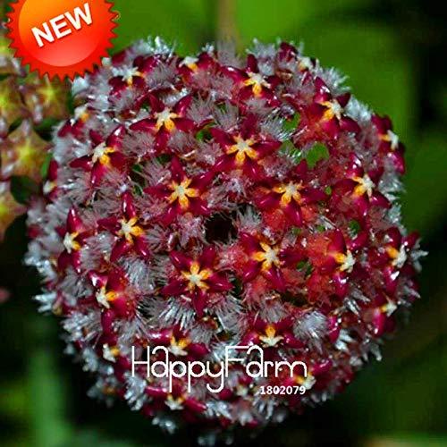 Hoya Plants Carnosa Hoya Carnosa Plants New Fresh Balcony Potted Flowers Hoya Bonsai,Dark Hoya Carnosa Plants,Orchid Seed 25 Colors Available 100 Pcs/Bag,#5S41I8 (Mix Color)
