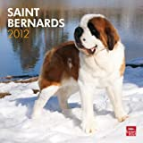 Saint Bernards 2012 Square 12X12 Wall Calendar (Multilingual Edition)