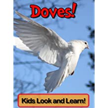 Doves! Learn About Doves and Enjoy Colorful Pictures - Look and Learn! (50+ Photos of Doves)