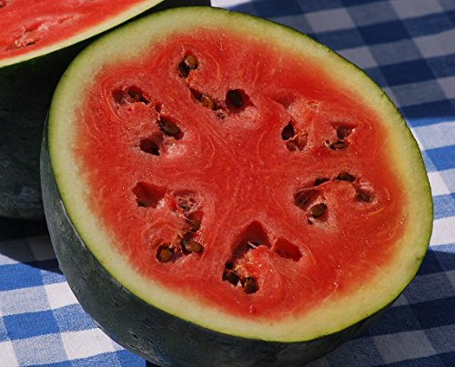 50+ Sugar Baby Watermelon Seeds- Heirloom, Non-GMO, Open-Pollinated by Ohio Heirloom (Heirloom Watermelon Seeds)