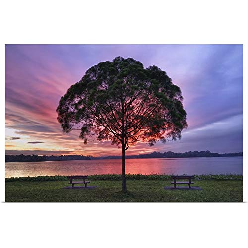 GREATBIGCANVAS Poster Print Entitled Colorful Light seen Behind Tree is Spectacle. by ()