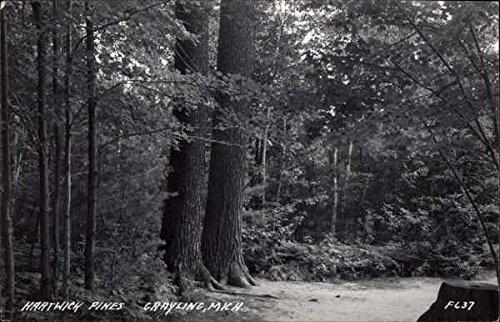 (Hartwick Pines Grayling, Michigan Original Vintage Postcard)