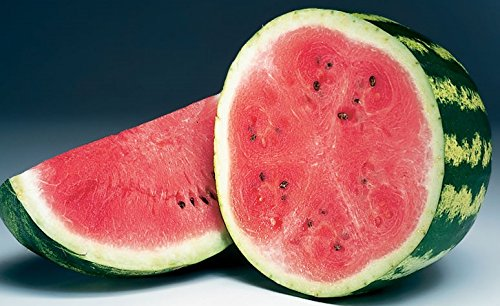David's Garden Seeds Fruit Watermelon Crimson Sweet D2133 (Red) 50 Heirloom Seeds