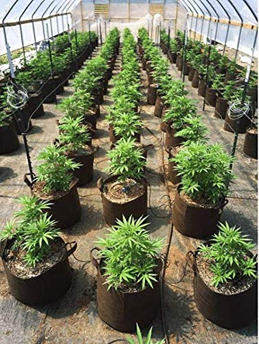 Best Aeration Fabric Garden Pots from Maui Mikes Eco Friendly. 5 Pack 3 Gallon Thicker Hemp Material and Recycled from Plastic Water Bottles Soft POTS