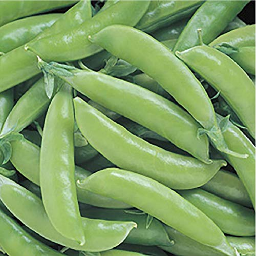 David's Garden Seeds Pea Super Sugar Snap SL4736 (Green) 100 Non-GMO, Open Pollinated Seeds