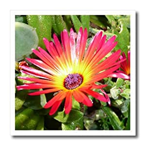 ht_22795_2 Albom Design Flowers - Stunning Red and Yellow Gerbera Daisy Napier New Zealand - Iron on Heat Transfers - 6x6 Iron on Heat Transfer for White Material