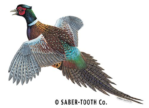 Pheasant Decal/sticker - Upland Game Bird Collection (Small-5 x 8-Facing as Shown)