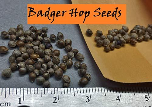 Wild Badger - Hop Seeds (50 Seeds)