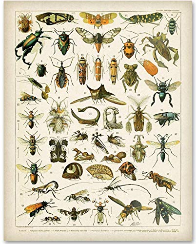 (Insects - 11x14 Unframed Art Print - Makes a Great Home Decor Under $15)