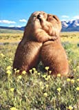 Prairie Dog Kissing Anniversary Card