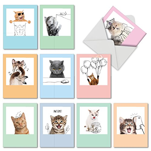 M6583TYG Feline Graffiti: 10 Assorted Thank You Note Cards Featuring Adorable Dkitty Images Combined with Line Drawings to Create Fun and Funky Portraits, w/White Envelopes.