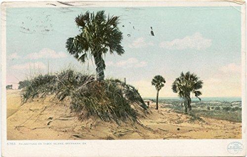 Historic Pictoric Postcard Print | Palmettoes on Tybee Island, Savannah, Ga, 1900 | Vintage Fine Art