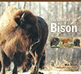 Portraits Of The Bison: An Illustrated Guide To Bison Society