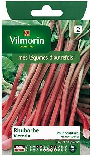 Vilmorin - Paquete Semillas Ruibarbo Victoria: Amazon.es: Jardín