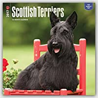 Scottish Terriers 2017 Square 12x12 Wall Calendar
