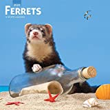 Ferrets 2020 12 x 12 Inch Monthly Square Wall Calendar, Domestic Furry Animals