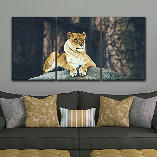 3 Panel Lion Lying on a Boulder Gallery x 3 Panels