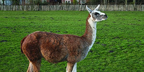 Southern Subtropics Alpaca/Llama Pasture Blend (1/2 acre)