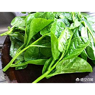 1-OZ BigPak: 1-oz to 8-oz Green Stem Malabar Vietnamese Spinach (LMS) Seeds; mồng tơi; 木耳菜 : Garden & Outdoor