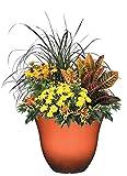 "Honeysuckle Planter, Patio Pot, 13"" Ember"