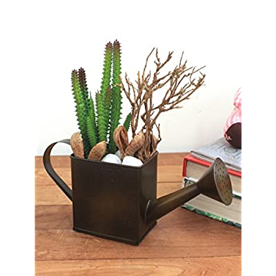 Miss Stellar Bonsai Cactus Plant in Jute Pot: Garden & Outdoor