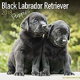 Black Labrador Puppies Calendar - Dog Breed Calendars - 2017 - 2018 wall Calendars - 16 Month by Avonside