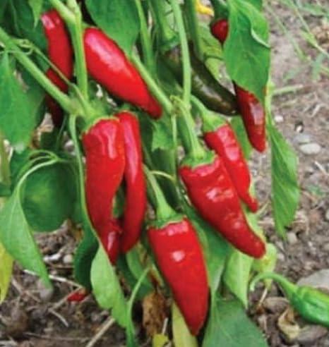 50 Seeds Kings Seeds Long Slim Pepper Chilli