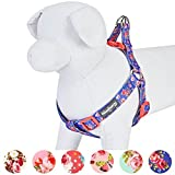 Blueberry Pet Step-in Spring Scent Inspired Rose Print Irish Blue Dog Harness, Chest Girth 20'' - 26'', Medium, Adjustable Harnesses for Dogs