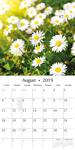 2019 Wall Calendar - Wild Flowers Calendar, 12 x 12 Inch Monthly View, 16-Month, Blooms and Florals Theme, Includes 180 Reminder Stickers