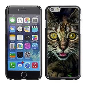 Paccase / SLIM PC / Aliminium Casa Carcasa Funda Case Cover para - Eyes Kitten Furry Whiskers Main Coon Black - Apple Iphone 6