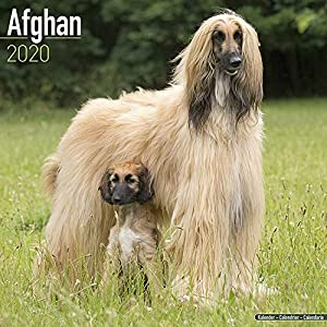 Afghan Calendar 2020 - Dog Breed Calendar - Wall Calendar 2019-2020 2