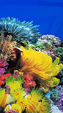 19.5 Inch Height Double Sided Aquarium Background Coral// Underwater Plants Decorations NEW!