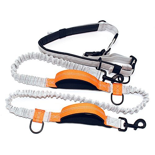 BOZOTA Retractable Hands Free Dog Leash with Dual Bungees for up to 150 lbs Large Dogs Running, Walking, Hiking, Dual Handle for Control and Safety, Premium, Adjustable Belt, Suit Most Dog by BOZOTA