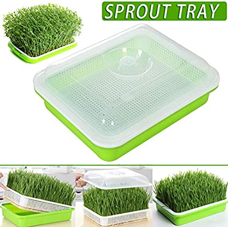 Tray Soil Free Large Capacity With Cover Seedling Tray Bean Sprout Plate Hydroponic For Home Kitchen Use Nobrand Jungle A Seed Sprouter Germination Kits