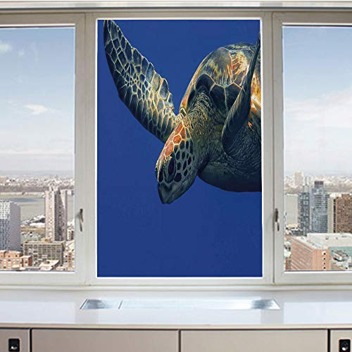 3D Decorative Privacy Window Films,Close Up Photo of Green Turtle at Sipadan Borneo Malaysia Cute Animal Under the Sea,No-Glue Self Static Cling Glass film for Home Bedroom Bathroom Kitchen Office -