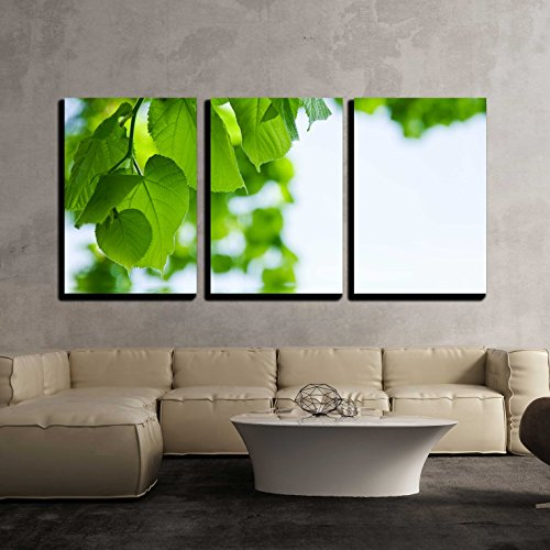 Nature Background Lime and Water Relflexion x3 Panels