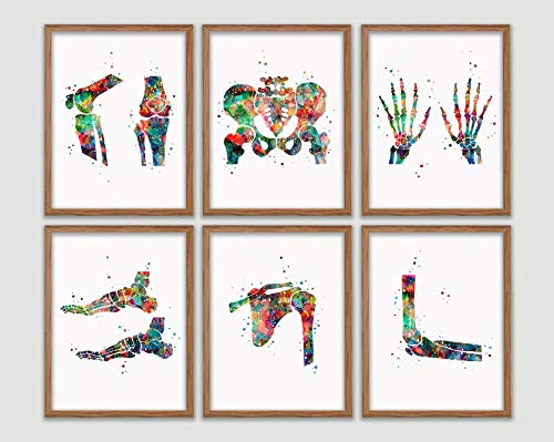 Human Bones Anatomy Watercolor Poster Set Skeletal System Art Print Human Skeleton Wall Decor Human Anatomy Artworks Human Anatomy Chart Wall Art Human Body Skeletal System