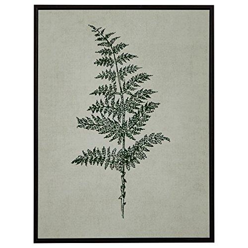 Modern Print of Green Fern, Espresso-Color Frame, 31.75'' x 41.75'' by Stone & Beam