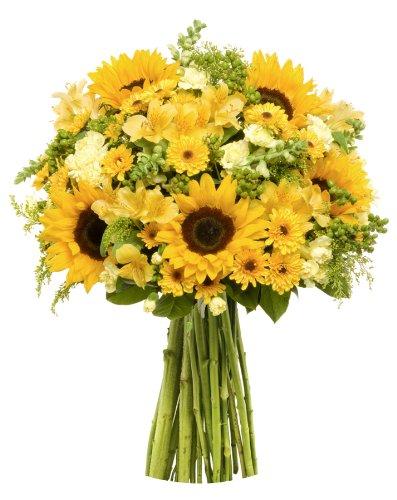 benchmark-bouquets-rays-of-sunshine-no-vase