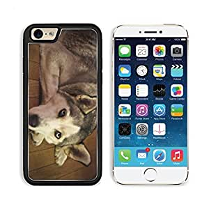 Alaskan Malamute Dog Pet Animal Apple iPhone 6 TPU Snap Cover Premium Aluminium Design Back Plate Case Customized Made to Order Support Ready Liil iPhone_6 Professional Case Touch Accessories Graphic Covers Designed Model Sleeve HD Template Wallpaper Phot wangjiang maoyi