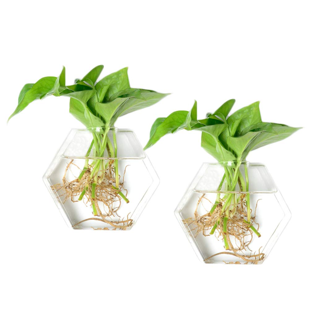 KYMAKE Pack of 2 Hexagon Shape Wall Hanging Clear Glass Plant Terrariums